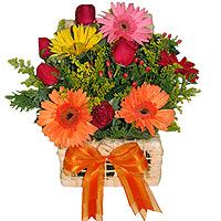 Picasso Arrangement with Gerbera Daisies